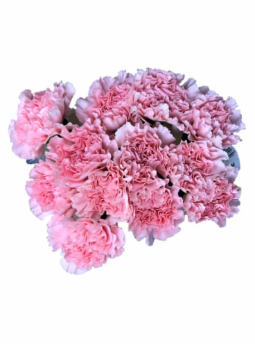 BLOOM HAUS™ Regular Carnations Perspective: front