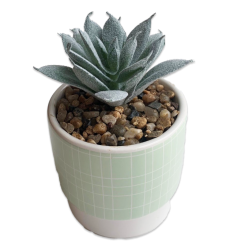 IG Design Potted Succulent - Green Perspective: front