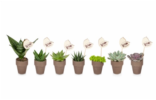 Clay Potted Succulent Plant - Assorted Perspective: front
