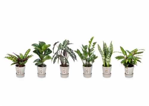 Foliage Signature Collection Houseplant - Assorted Perspective: front
