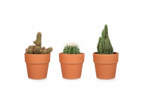 Cactus in Clay Pot - Assorted Perspective: front