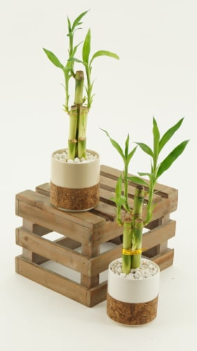 Bamboo Assortment Perspective: front