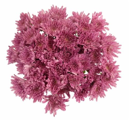 Premium Poms - Purple / Lavender Perspective: front