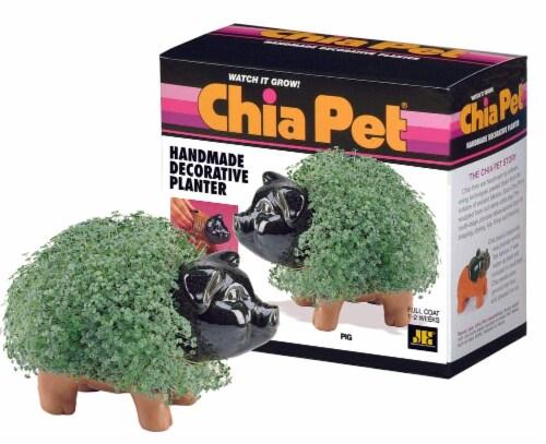 Chia Pet® Pig Handmade Decorative Planter Perspective: front