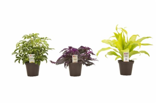 Exotic Angel Assorted Potted Plant Perspective: front
