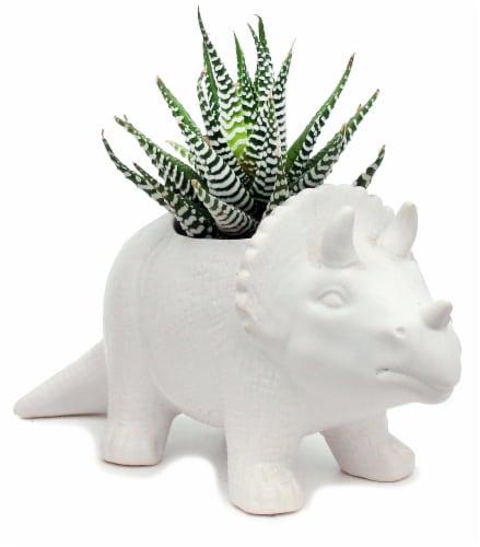 Dinosaur Ceramic Succulent Planter Perspective: front