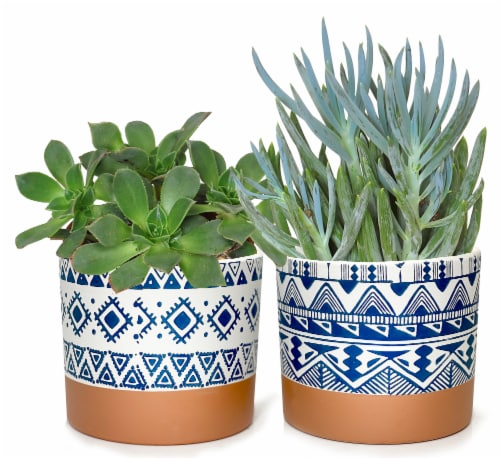 Geo Pattern Potted Succulent Perspective: front