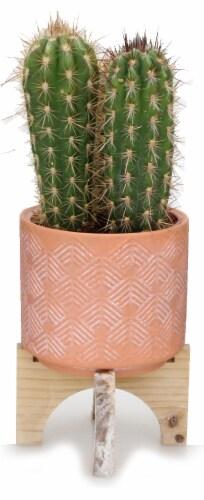 Hacienda Cactus in Wood Ceramic Stand Perspective: front