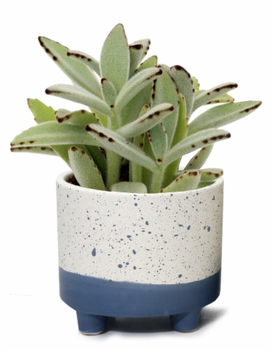 Succulent in Footed Splatter Paint Pot Perspective: front
