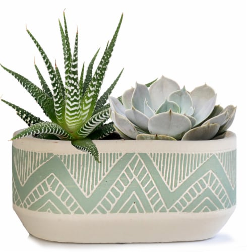 Succulents in Patterned Tribal Ceramic Pot Perspective: front