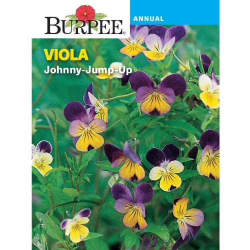 Burpee Viola Heirloom Johnny-Jump Up Seeds Perspective: front