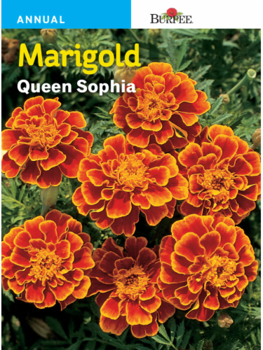 Burpee Marigold Queen Sophia Seeds Perspective: front