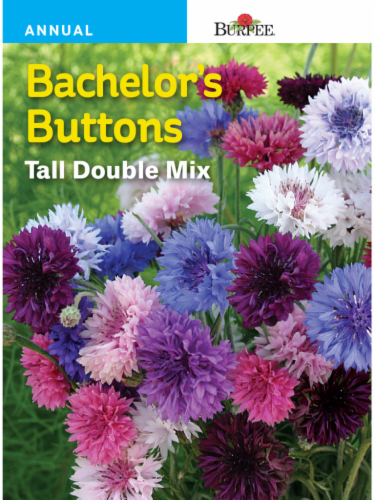 Burpee Bachelor Button Tall Double Mix Seeds Perspective: front