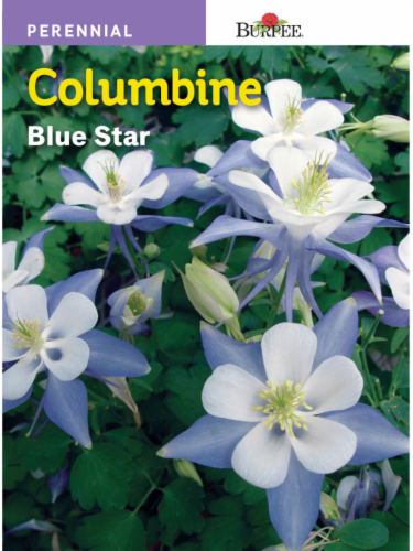 Burpee Columbine Blue Star Seeds Perspective: front