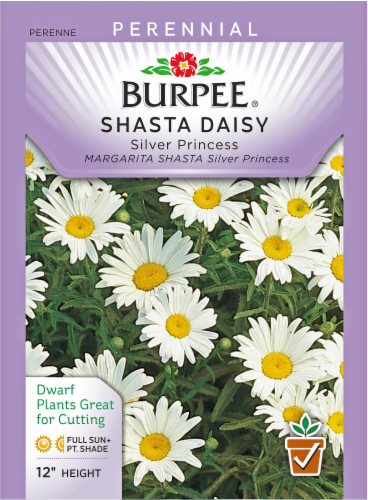 Burpee Shasta Daisy Silver Princess Seeds - White/Yellow Perspective: front