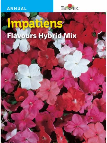 Burpee Impatiens Flavours Hybrid Mix Seeds Perspective: front