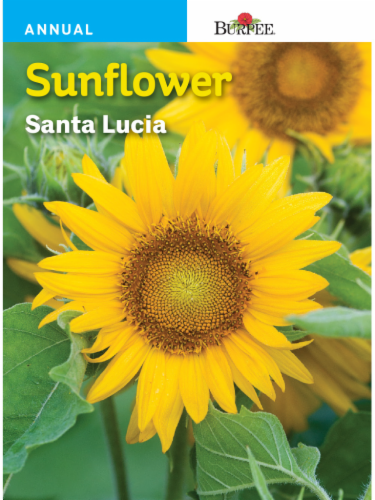 Burpee Sunflower Santa Lucia Seeds Perspective: front