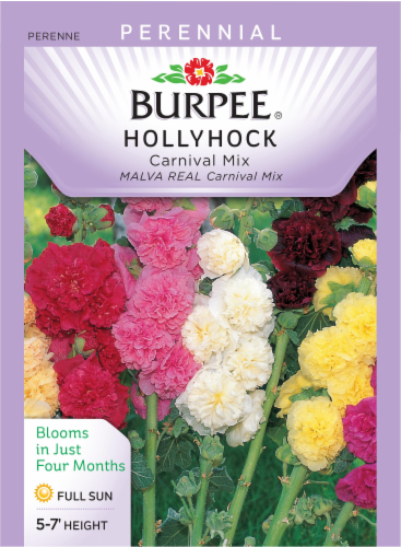 Burpee Carnival Mix Hollyhock Seeds Perspective: front