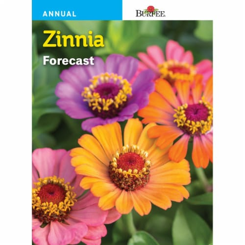 Burpee Zinnia Forecast Seeds Perspective: front