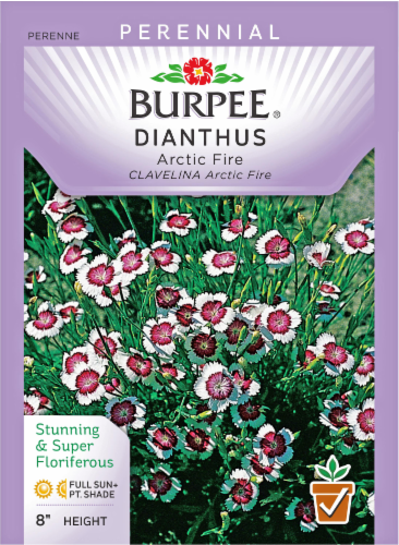 Burpee Dianthus Arctic Fire Seeds Perspective: front