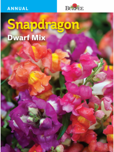 Burpee Snapdragon Dwarf Mix Seeds Perspective: front