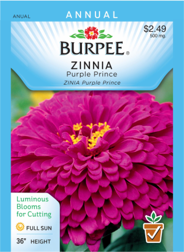 Burpee Zinnia Purple Prince Seeds Perspective: front