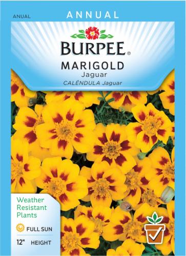 Burpee Marigold Jaguar Seeds Perspective: front