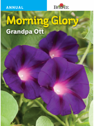 Burpee Morning Glory Grandpa Ott Seeds Perspective: front