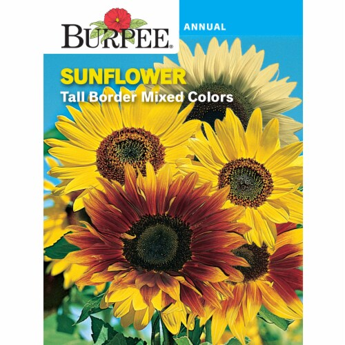 Burpee Sunflower Tall Border Mix Seeds Perspective: front
