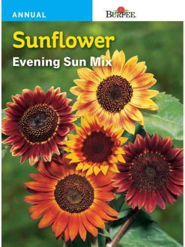 Burpee Sunflower Evening Sun Mix Seeds Perspective: front