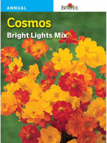 Burpee Cosmos Bright Lights Mixed Seeds Perspective: front