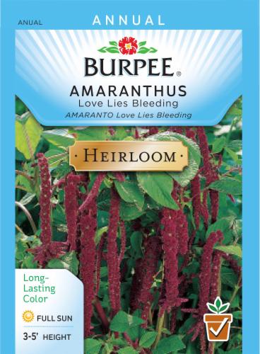 Burpee Love Lies Bleeding Heirloom Amaranthus Seeds Perspective: front