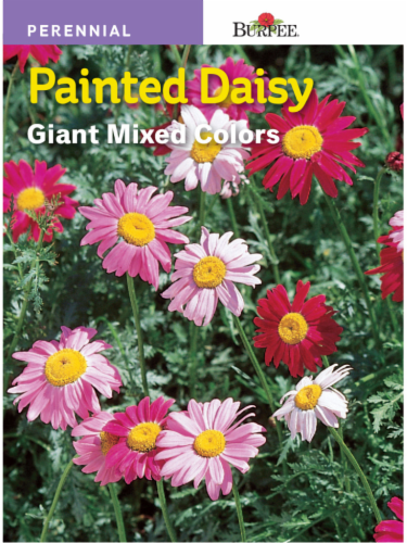 Burpee Mixed Painted Daisy Seeds Perspective: front