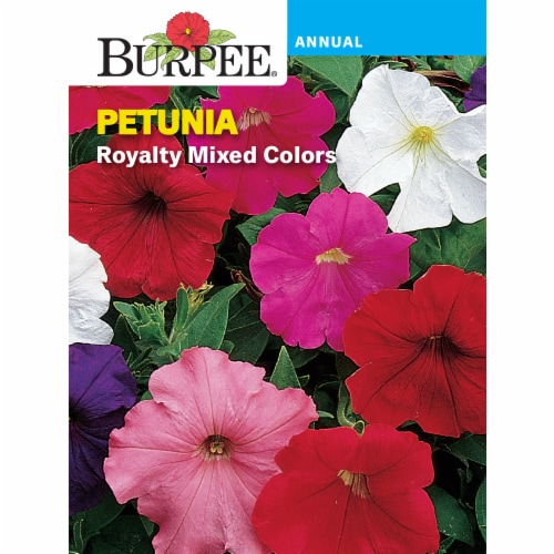 Burpee Royalty Mix Petunia Seeds Perspective: front