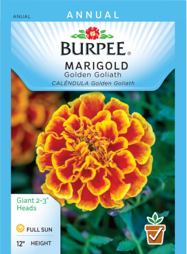 Burpee Golden Goliath Marigold Seeds Perspective: front