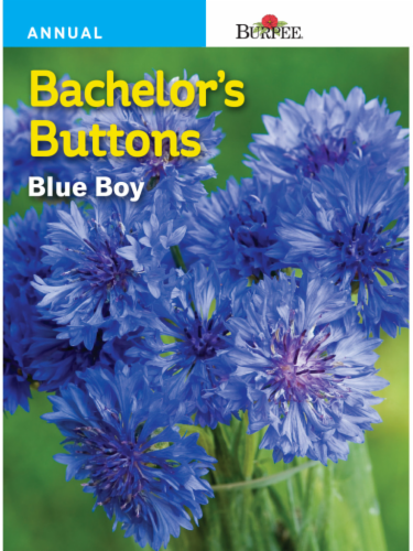 Burpee Bachelor's Buttons Blue Boy Seeds Perspective: front