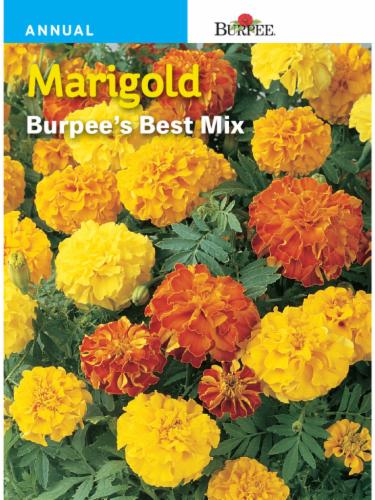 Burpee Marigold Burpee's Best Mix Seeds Perspective: front