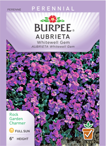 Burpee Whitewell Gem Aubrieta Seeds Perspective: front