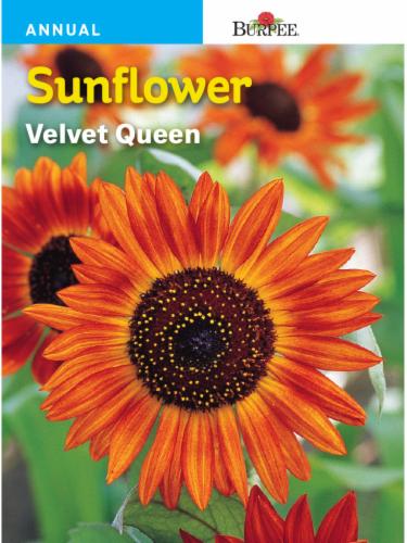Burpee Velvet Queen Seeds Perspective: front