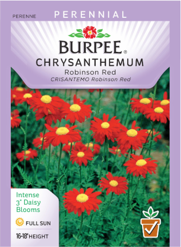 Burpee Robinson Red Chrysanthemum Seeds Perspective: front