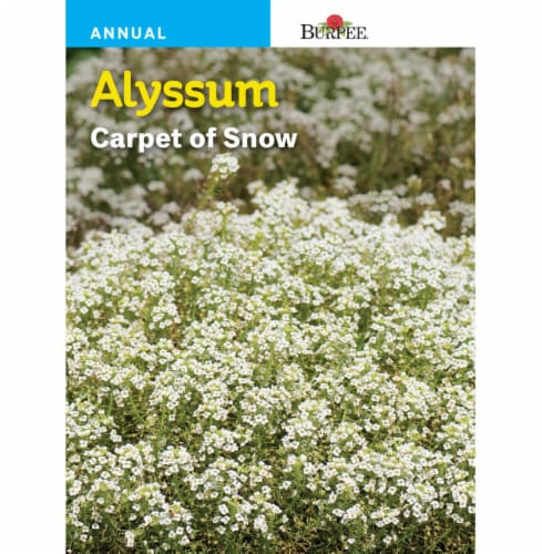 Burpee Alyssum Carpet of Snow Seeds Perspective: front