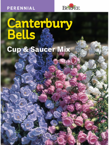 Burpee Canterbury Bells Cup and Saucer Mix Seeds Perspective: front