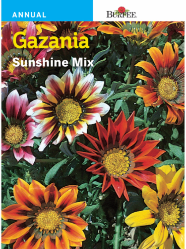Burpee Gazania Sunshine Mix Seeds Perspective: front