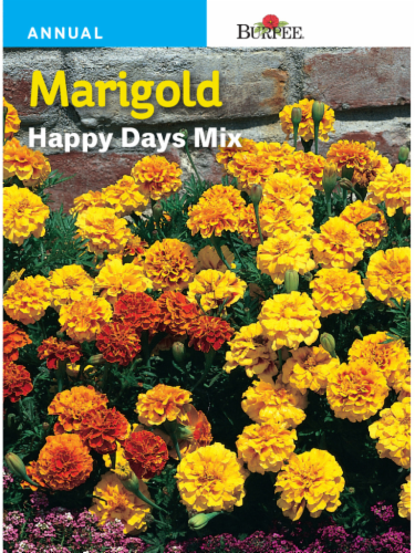 Burpee Marigold Happy Days Mix Seeds Perspective: front