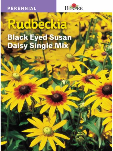 Burpee Goldsturm Rudbeckia Seeds Perspective: front