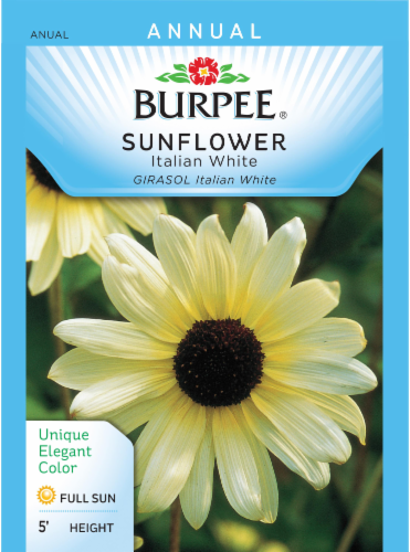 Burpee Italian White Sunflower Seeds Perspective: front