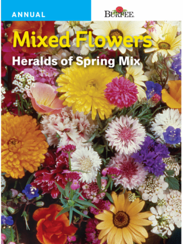 Burpee Mixed Flowers Heralds of Spring Mix Seeds Perspective: front