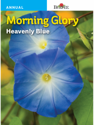 Burpee Morning Glory Heavenly Blue Seeds Perspective: front