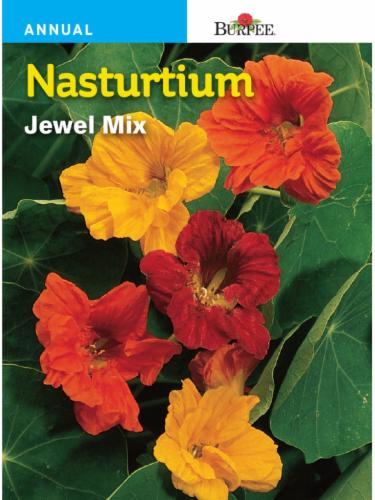 Burpee Nasturtium Jewel Mix Seeds Perspective: front