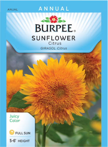 Burpee Citrus Sunflower Seeds Perspective: front